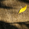 Yellow leaf on wooden surface